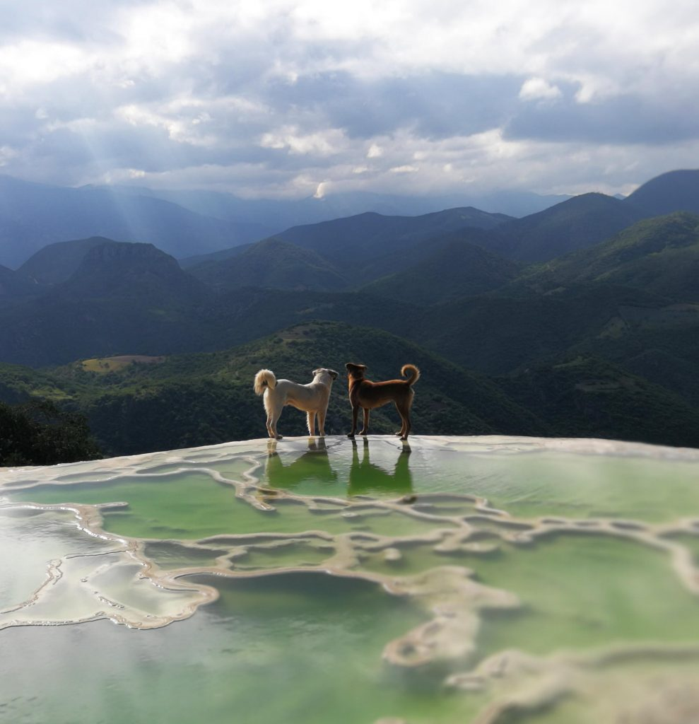 Dogs and amazing landscapes
