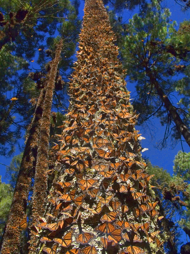 Butterflys on a tree, sanctuary