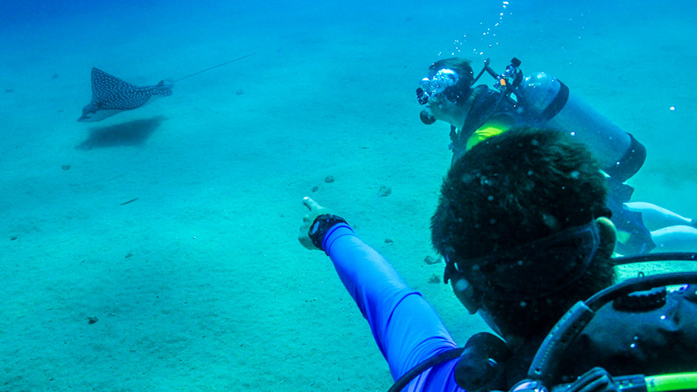scuba diving is a great idea in Puerto Vallarta